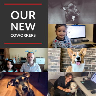 Our New Cowokers - Varay Managed IT
